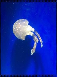名古屋港水族館のクラゲ