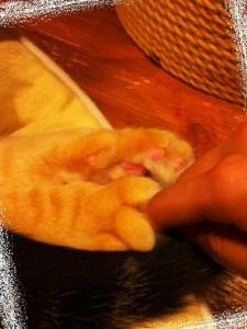 猫の肉球に挟まれる
